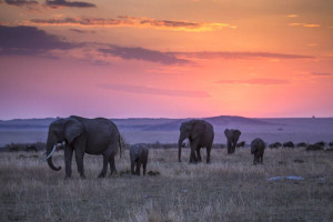 MaraExpeditionCamp_ElephantsAtSunset